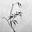 Delicate Bamboo 2